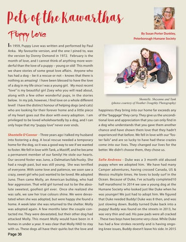 Page 36 of Puppy Love - Rescue and Adoption pets