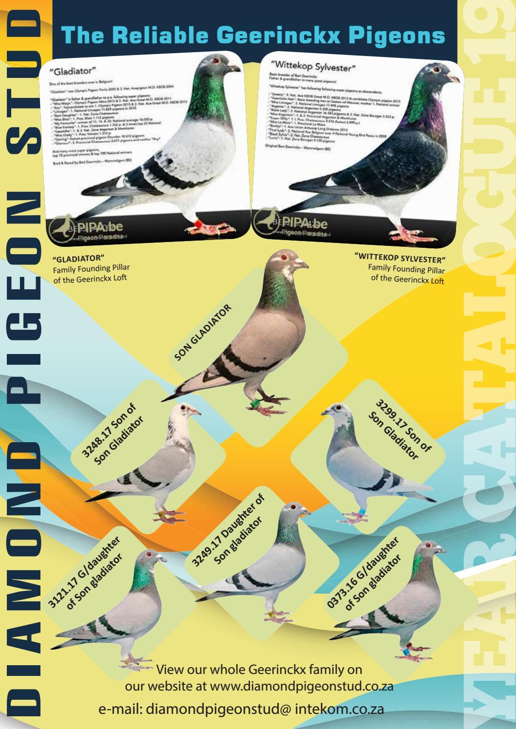 Diamond Pigeon Stud Catalog by SwiftPrint - issuu