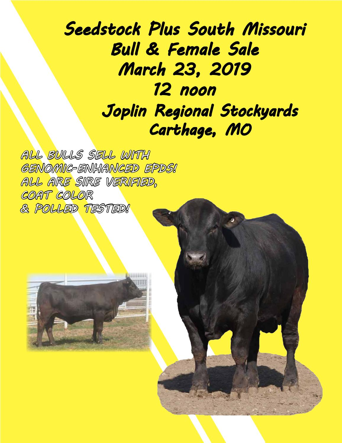 d8a2be90406b Seedstock Plus South Missouri Bull   Female Sale by American Gelbvieh  Association - issuu