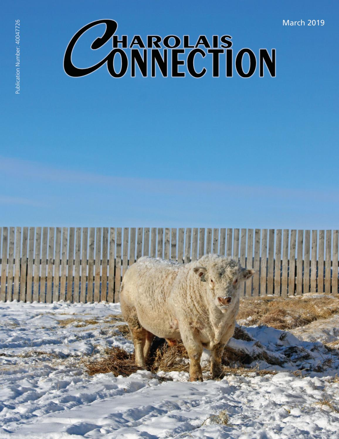march 2019 Charolais Connection by Charolais Banner - issuu