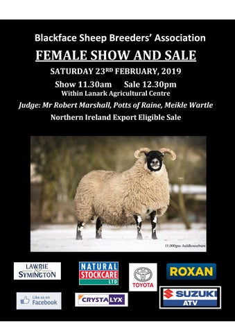 Blackface Sheep Breeders' Association FEMALE SHOW AND SALE SATURDAY