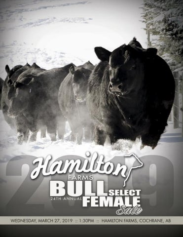 Hamilton Farms 24th Annual Bull & Select Female Sale by Bohrson ...
