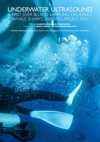 Page 71 of Underwater Ultrasound & First Ever Blood Sampling on Adult Whale Sharks