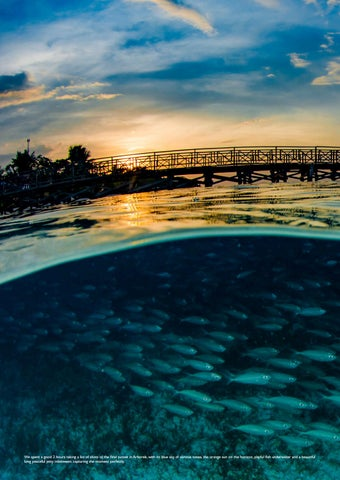 Page 74 of Raja Ampat – The Heart of the Coral Triangle