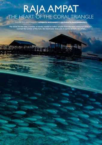 Page 75 of Raja Ampat – The Heart of the Coral Triangle