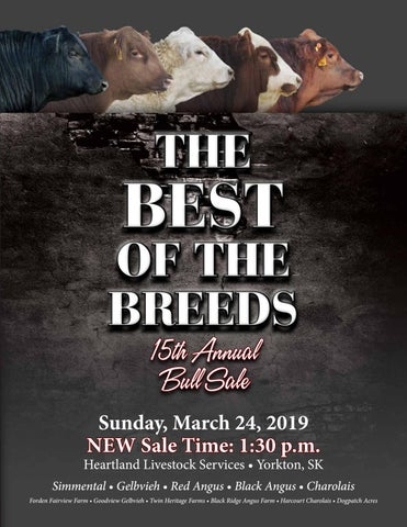 b4f195460ed The Best of the Breeds 15th Annual Bull Sale by Today s Publishing ...