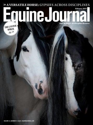 6dddb18467aa5 A Versatile Horse  Gypsies Across Disciplines February 2019