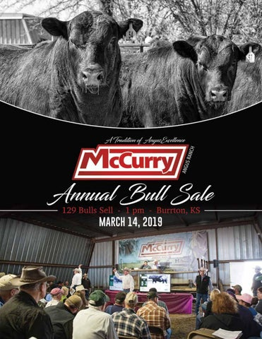 2019 McCurry Angus Bull Sale by Tracy McMurphy - issuu