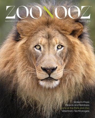 Zoonooz March 2019 By San Diego Zoo Global Issuu