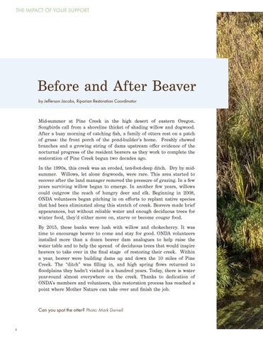 Page 4 of Before and After Beaver