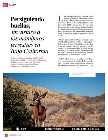 Page 10 of Persiguiendo huellas, un vistazo a los mam\u00EDferos terrestres en Baja California