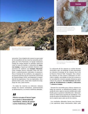 Page 11 of Persiguiendo huellas, un vistazo a los mam\u00EDferos terrestres en Baja California