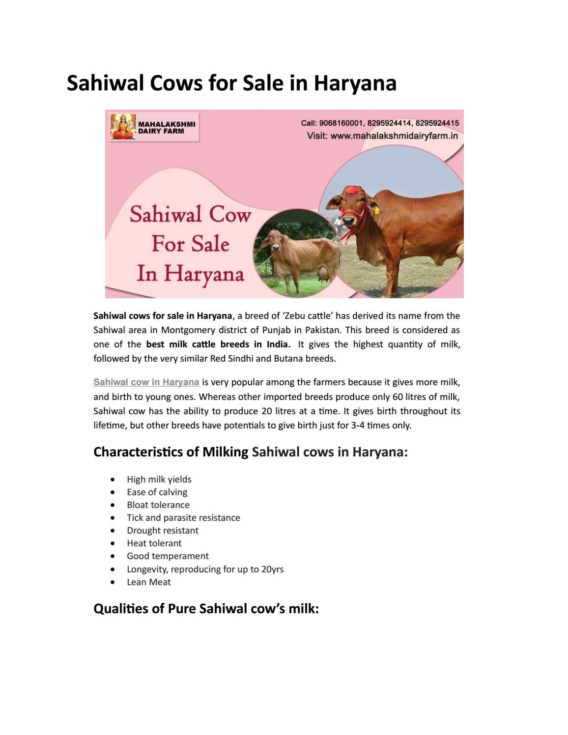 Sahiwal Cow For Sale in Haryana by Mahalakshmi Dairy Farm