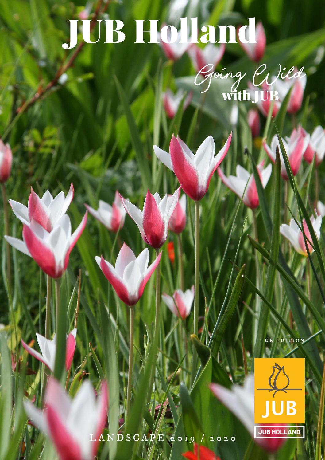 Mixed Colour You Garden Limited Striped Tulip Rembrandt x 25 Bulbs Flower