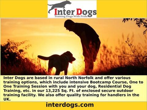 dog behaviorist near me by interdogsonline - issuu