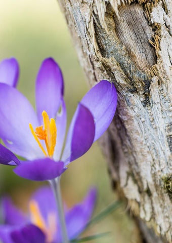 Page 59 of 5 Macro Photography Tips for Spring