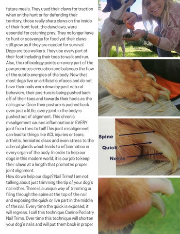 Page 11 of Canine Podiatry