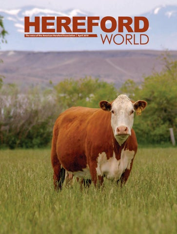 April 2019 Archives - American Hereford