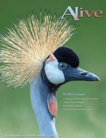 Alive - Spring 2019 by Zoological Society of Milwaukee - issuu