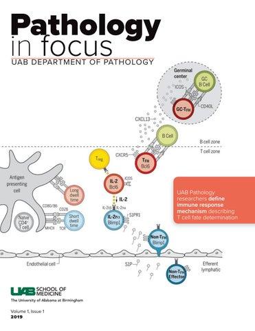 UAB Pathology in Focus Vol  1 Issue 1 by UABPathology - issuu