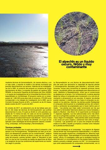 Page 21 of Salvar las tierras del olivo