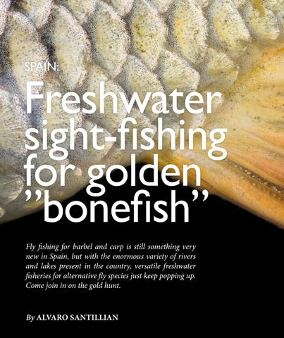 """Page 44 of Freshwater sight-fishing for golden """"bonefish"""""""