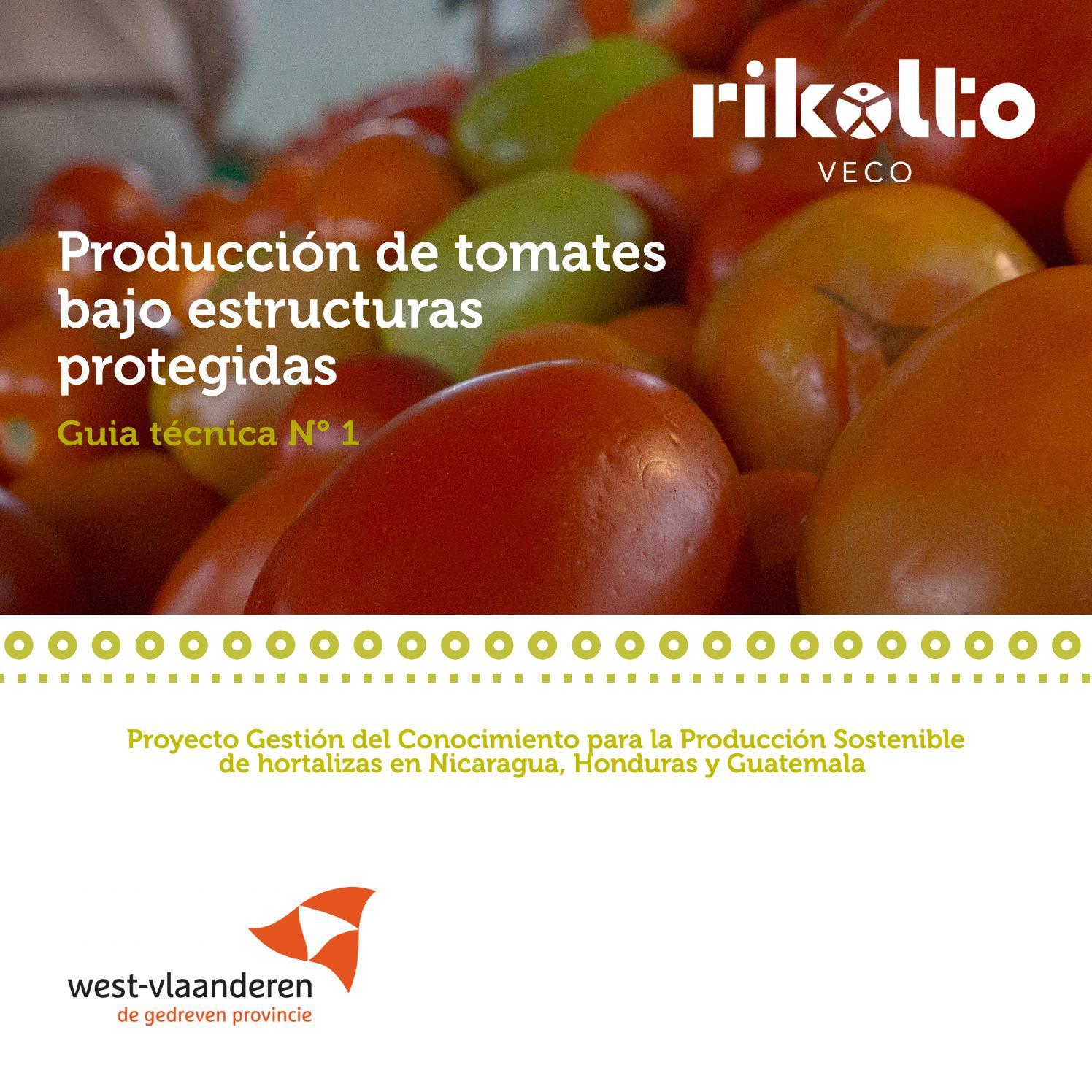 puedes conseguir mejores rendimientos si podas tus tomates