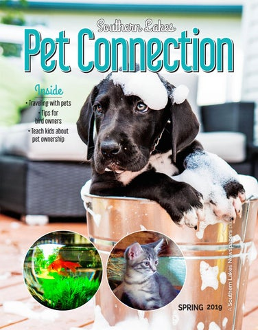Pet Connection for Spring 2019 by Southern Lakes Newspapers