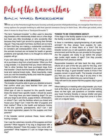 Page 23 of Pets - Backyard Breeders