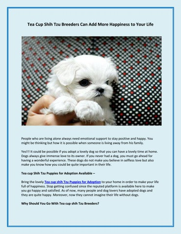 Tea Cup Shih Tzu Breeders Can Add More Happiness To Your Life By
