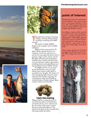 Page 5 of Alligator Point, Florida