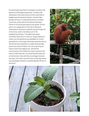 Page 11 of A Brief History of Kratom
