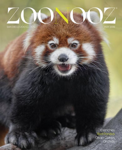 Zoonooz May 2019 By San Diego Zoo Global Issuu