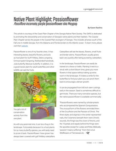 Page 27 of Native Plant Highlight: Passionflower