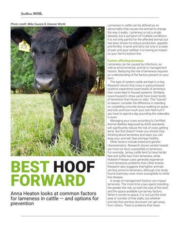 Page 28 of Best Hoof Forward