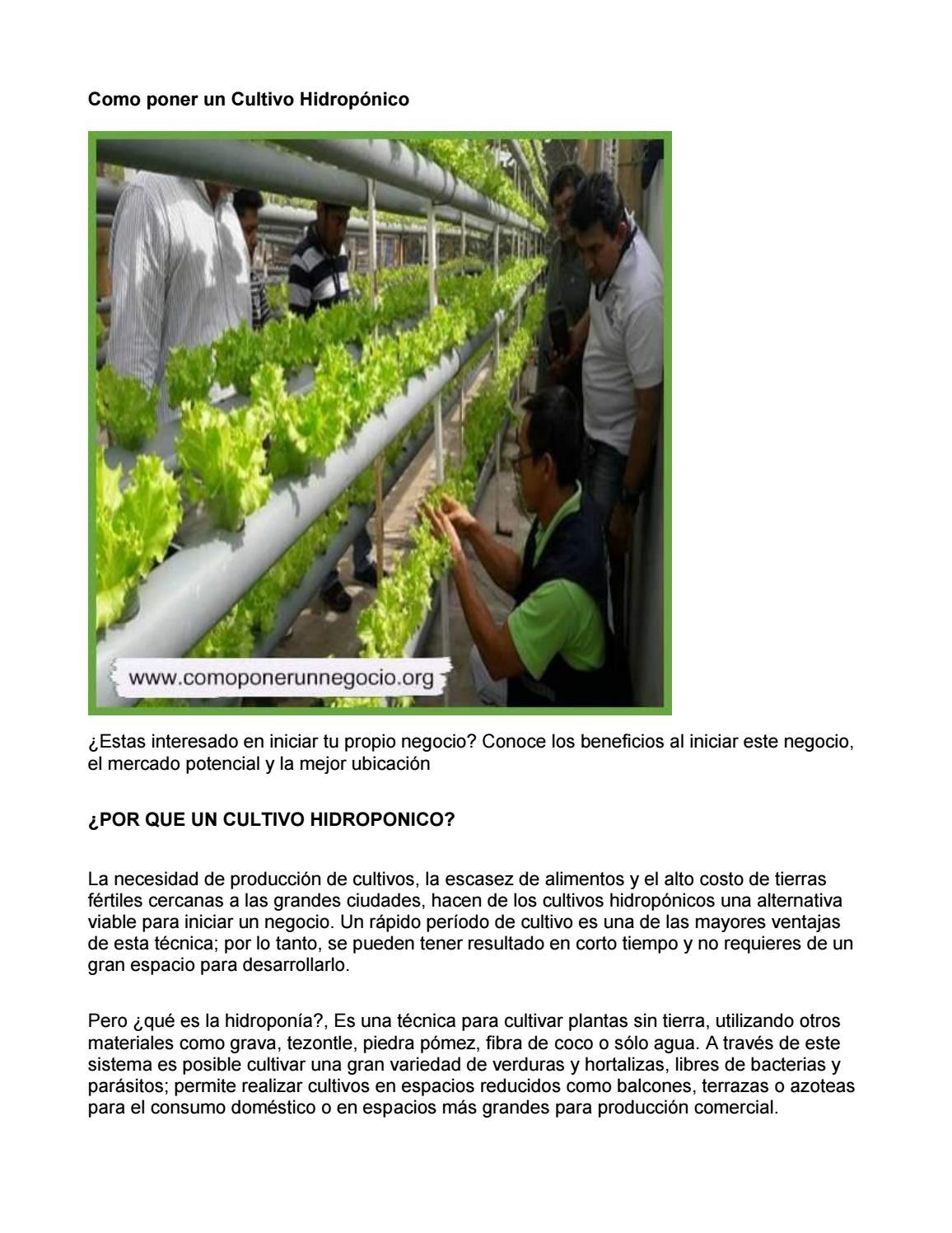 Como Poner Un Cultivo Hidropónico By Guiaparanegocio Issuu
