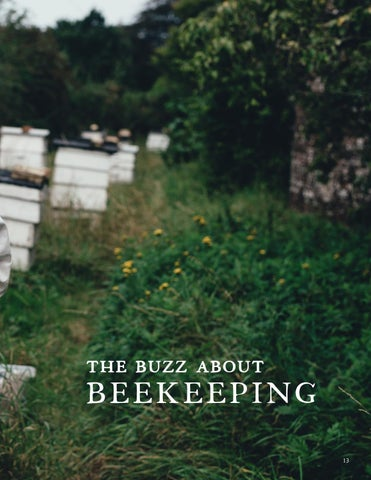 Page 13 of BeeKeeping