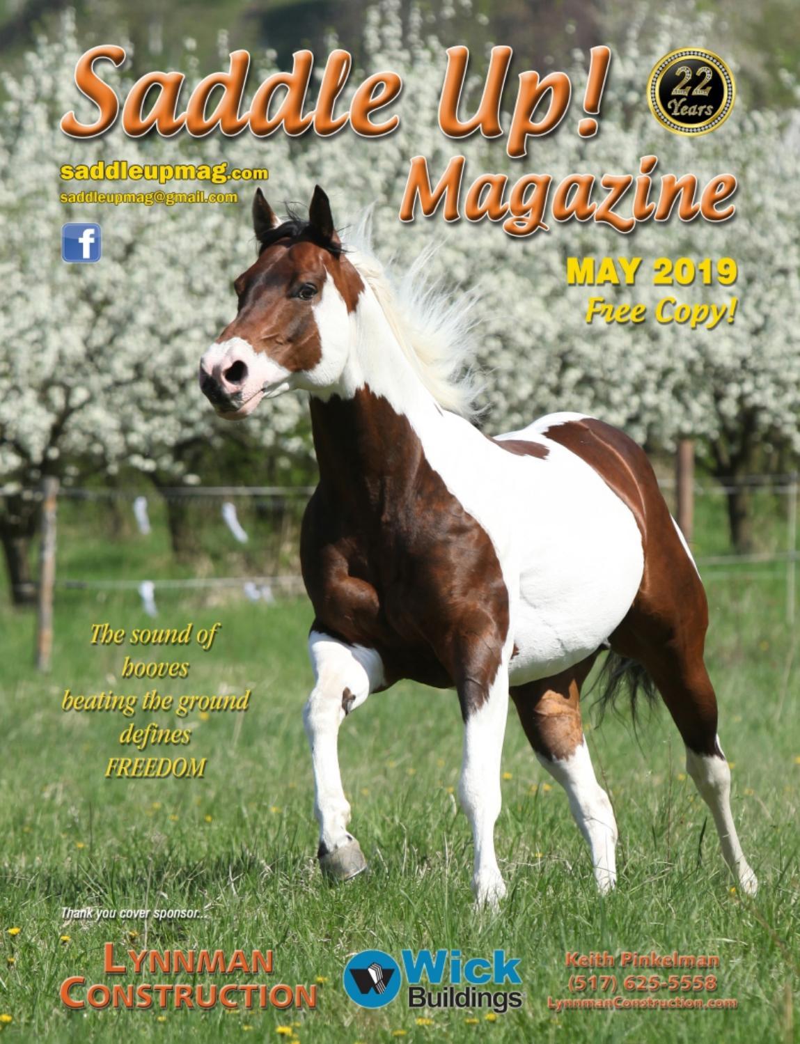 NEW! Carlisle Wood Handle Full English Horse Grooming Curry Brush Box of 12