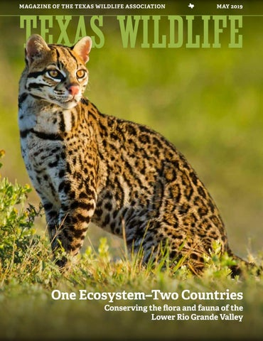 Texas Wildlife - May 2019 - One Ecosystem-Two Countries by