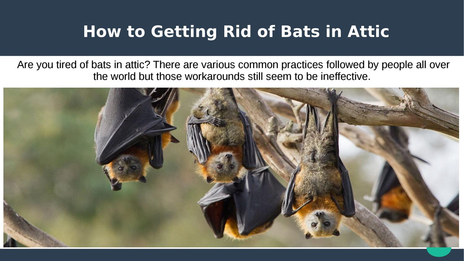 How To Getting Rid Of Bats By Georgia Bat Control Issuu