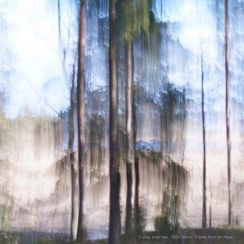 Page 6 of Denmark artist captures whispering forests