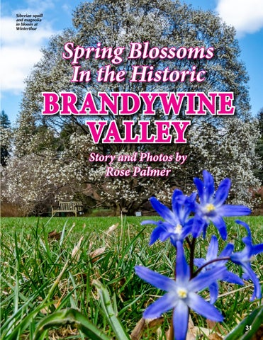 Page 31 of Spring Blossoms in the Historic Brandywine Valley