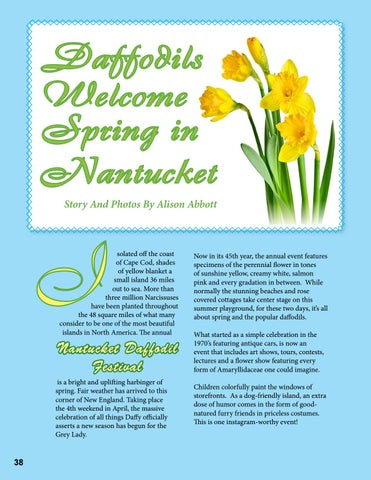 Page 38 of Daffodils Welcome Spring in Nantucket