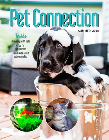 Pet Connection for Summer 2019 by Southern Lakes Newspapers