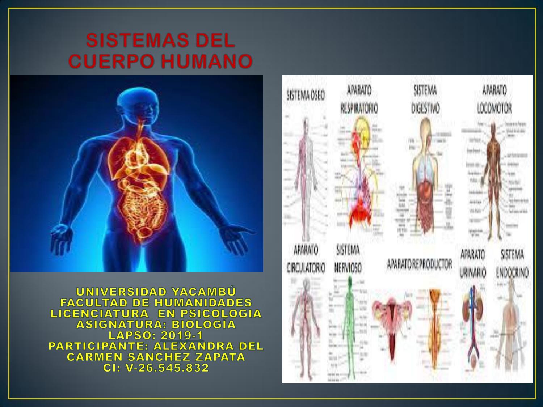Revista Digital Sistema del Cuerpo Humano by delcarmenzapata1997 - issuu