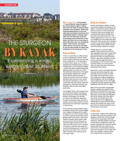 Page 46 of Kayak down a relaxed river