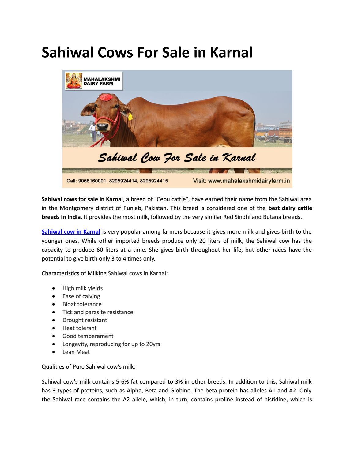 Sahiwal Cows For Sale in Karnal by Mahalakshmi Dairy Farm