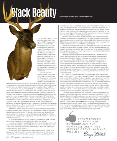 Page 54 of Black Beauty