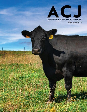 2019 May/June ACJ by American Chianina Journal - issuu