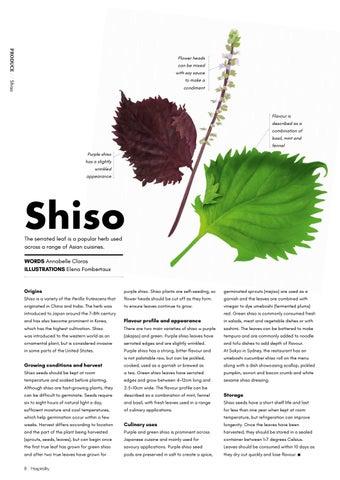 Page 8 of Shiro